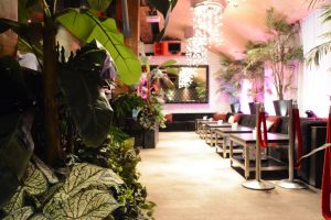 Tropical areca palm and banana palm with mixed tropical houseplants for VIP event decor