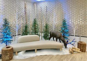 West Coast winter wonderland display and photo opportunity with alpine trees, birch LED trees, birch poles, wood stumps, deer prop and uplighting