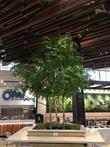 Artificial Birch Tree on natural wood trunk inside bar banquette seating in food cour