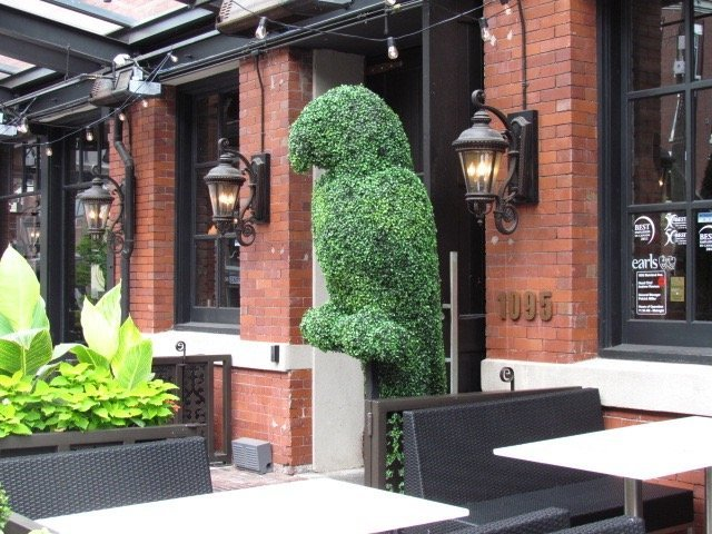 Custom Boxwood parrot shape for restaurant patio branding