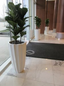 Artificial Fiddle Leaf Fig plant in fibreglass fluted planters, residential lobby decor