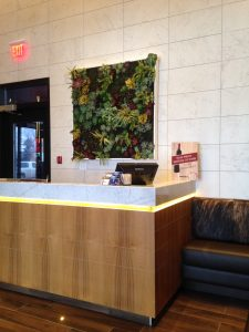 Artificial Green Wall framed with all succulents and painted wood frame for Moxie's Restaurants