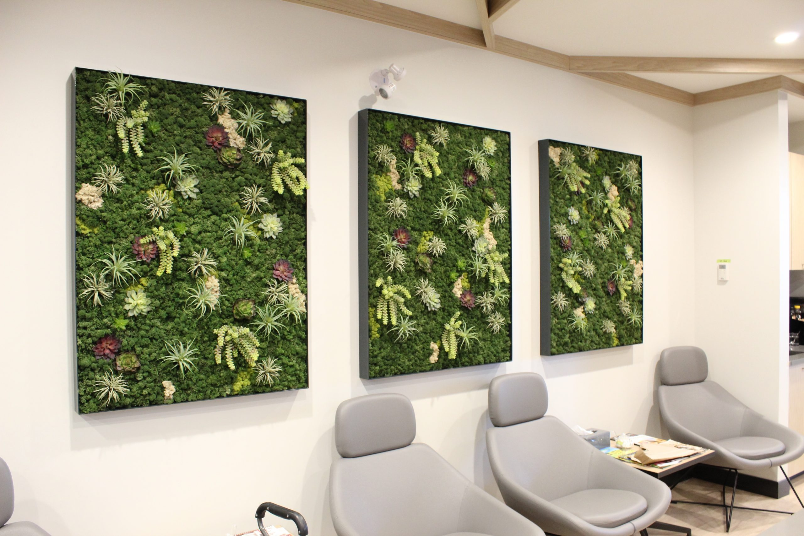 Preserved moss and artificial succulent green wall framed tryptic, custom aluminum frames for office lobby decor