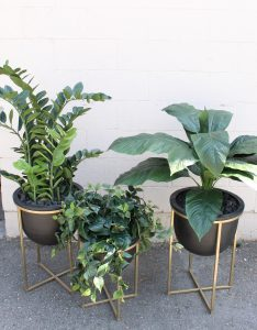 Artificial zamia, philodendron and spathiphyllum plants in black planters on gold stands, for restaurant decor