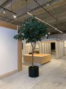 artificial maple tree on natural trunk in black cylinder planter for showroom decor