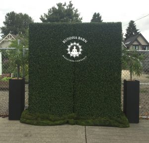 Two boxwood hedges flanked with potted artificial marijuana plants and custom company logo on acrylic