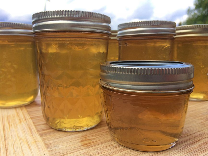 Different sized mason jars of homemade dandelion jelly
