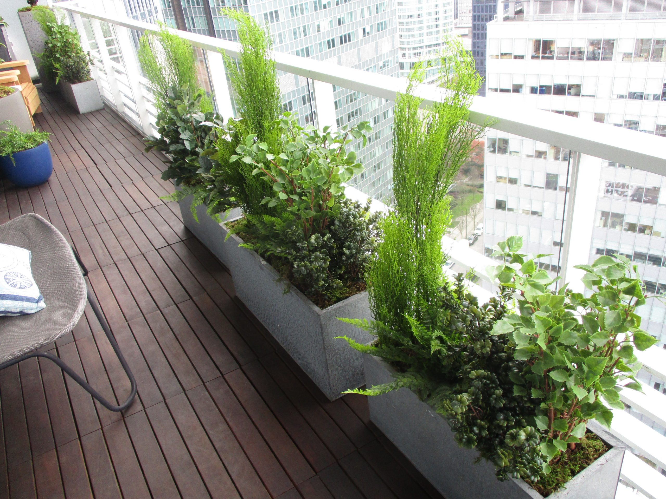 Rectangular metal planters filled with mixed west coast greenery for residential patio design