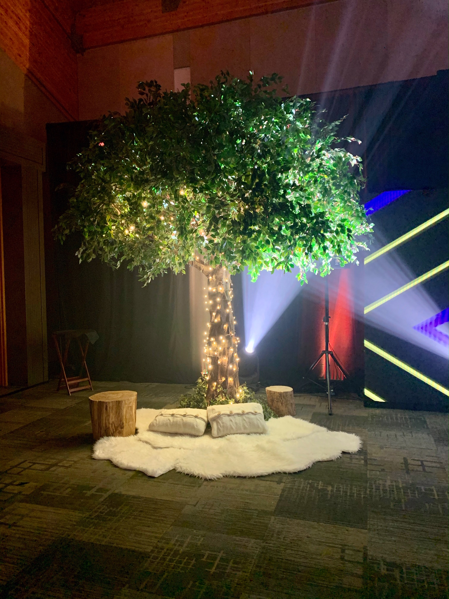 Canopy ficus tree with added lights and elevated park and picnic decor underneath the tree