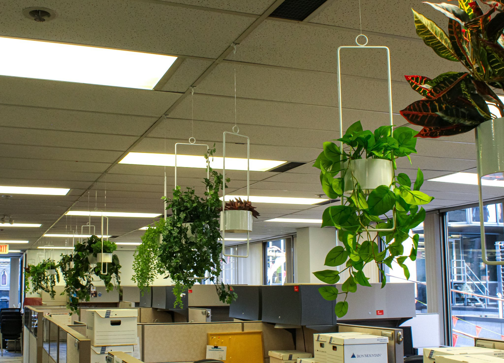 Hanging white planters in two sizes, filled with various artificial greenery, hanging over cubicles for office decor.