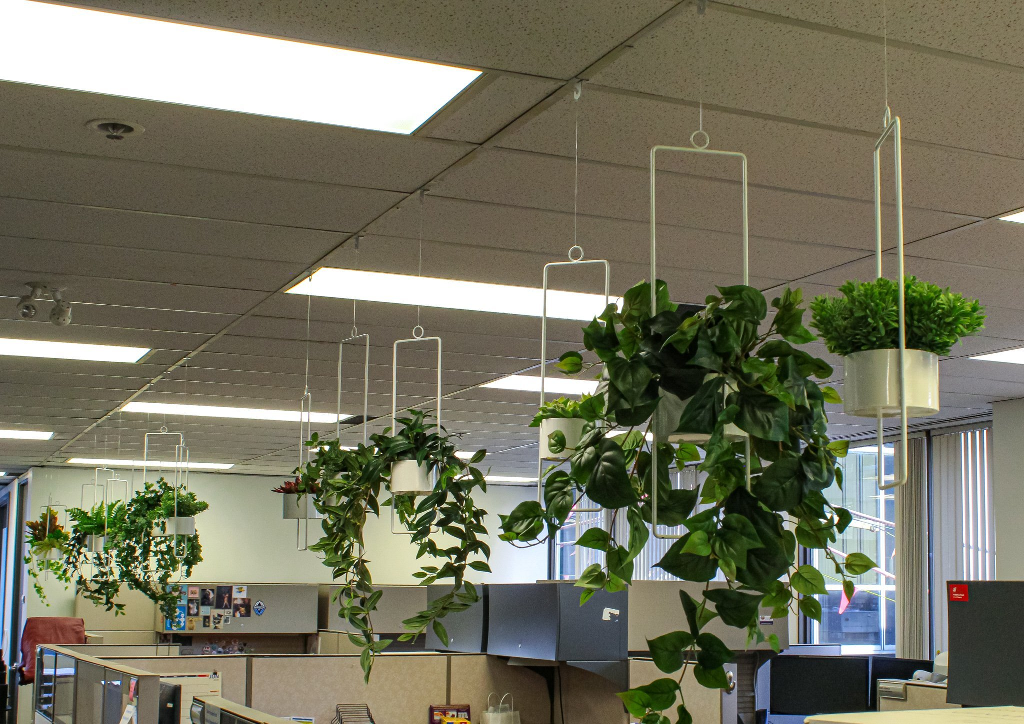 White metal hanging planters, two sizes with various artificial greenery hanging over cubicles