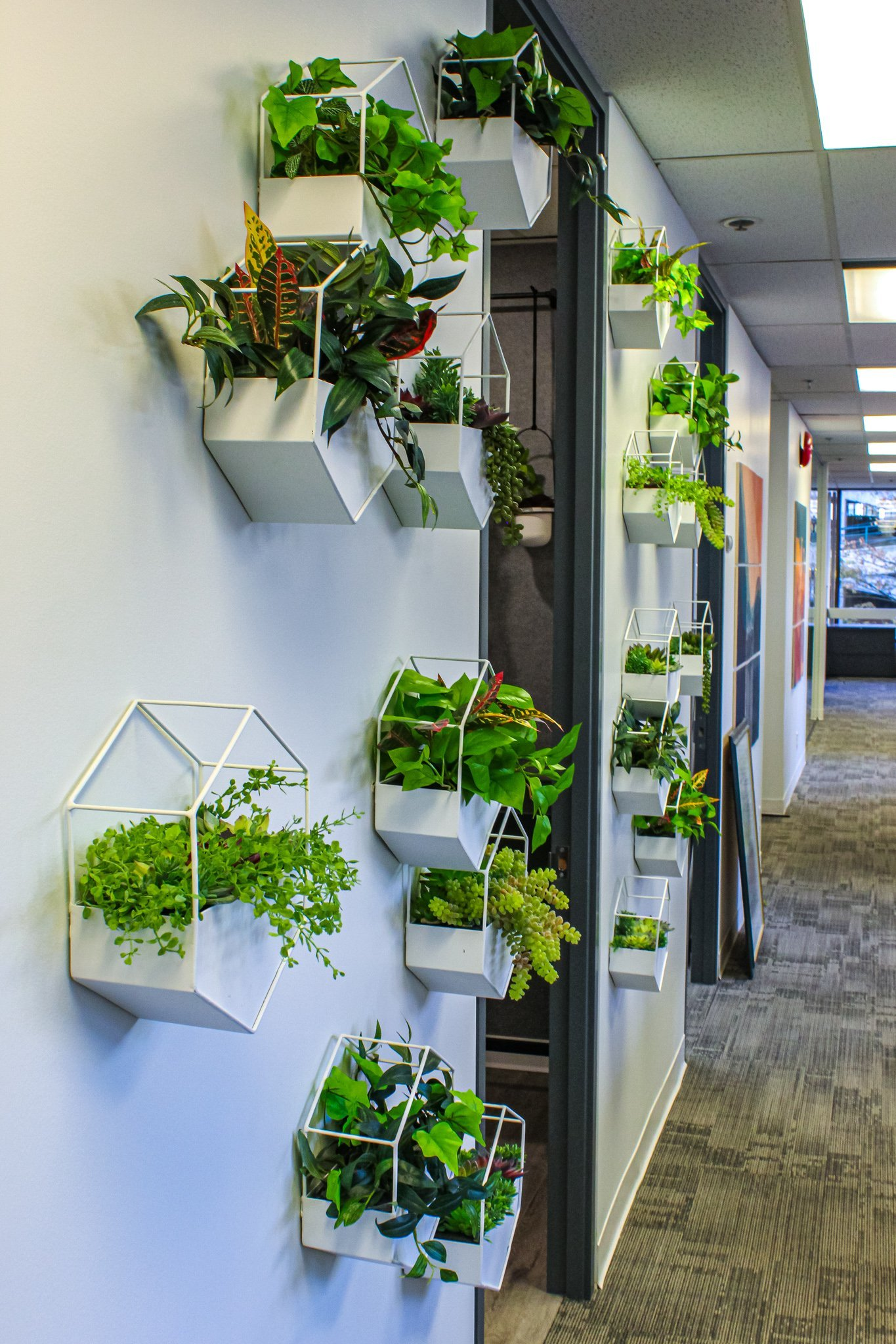 White hexagon planters as wall decor for coffee bar entrance in office building