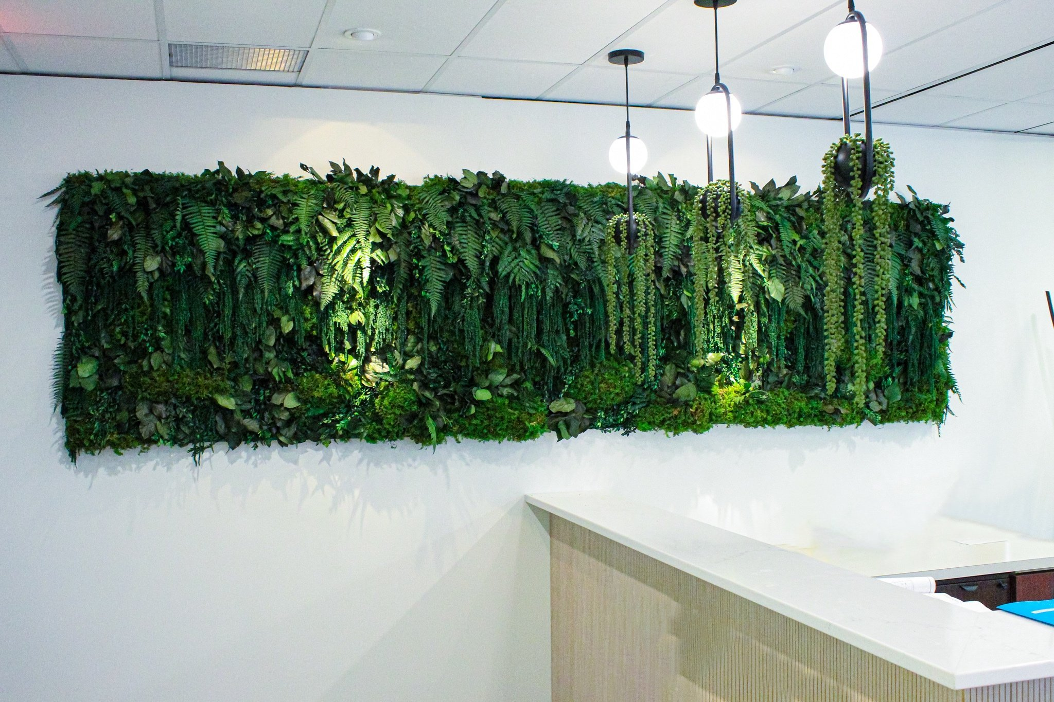 All preserved moss and plant green wall including fern moss, amaranthus, salal and ferns for office reception wall
