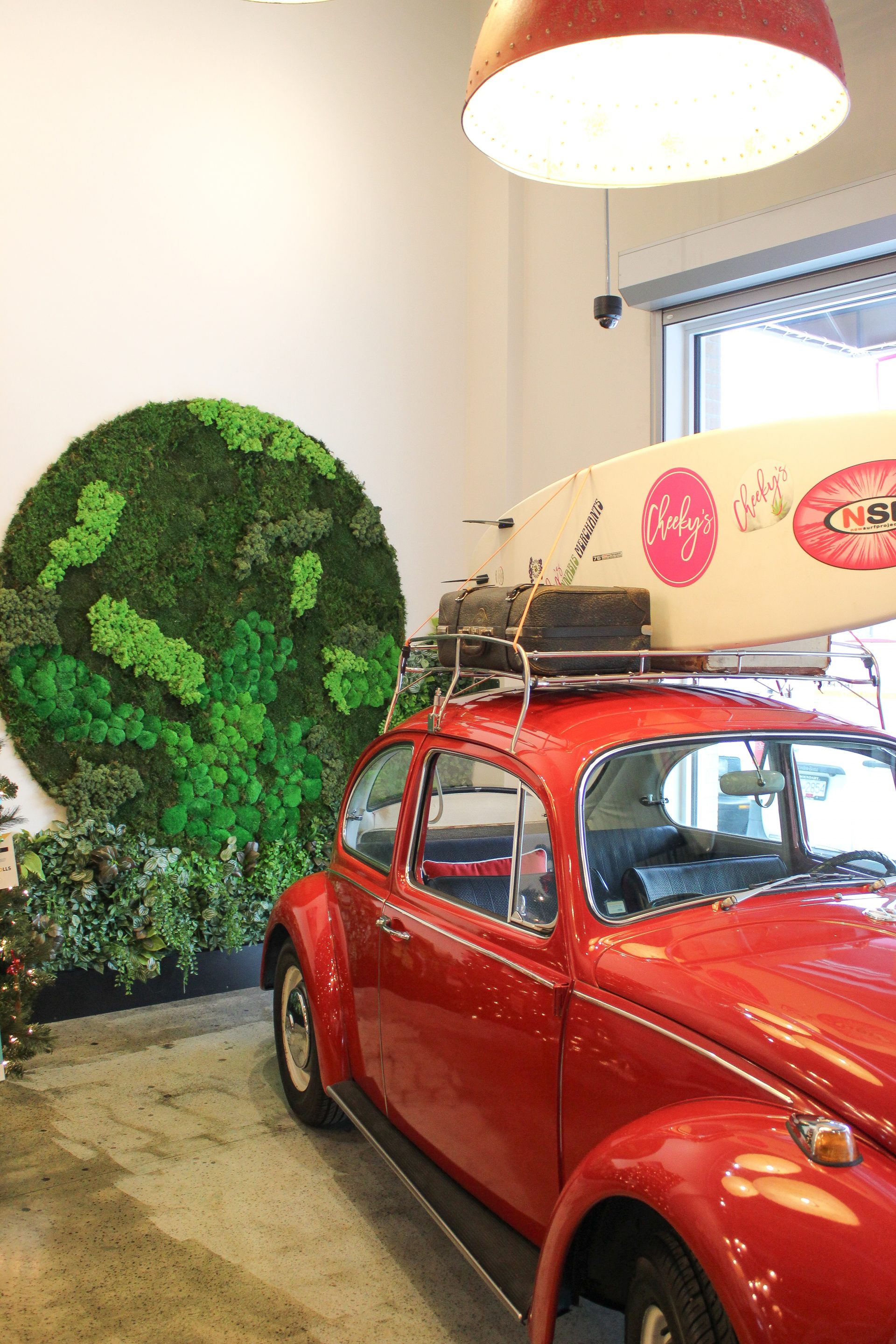 preserved moss, mixed in circle shape on the wall behind a vintage vw bug