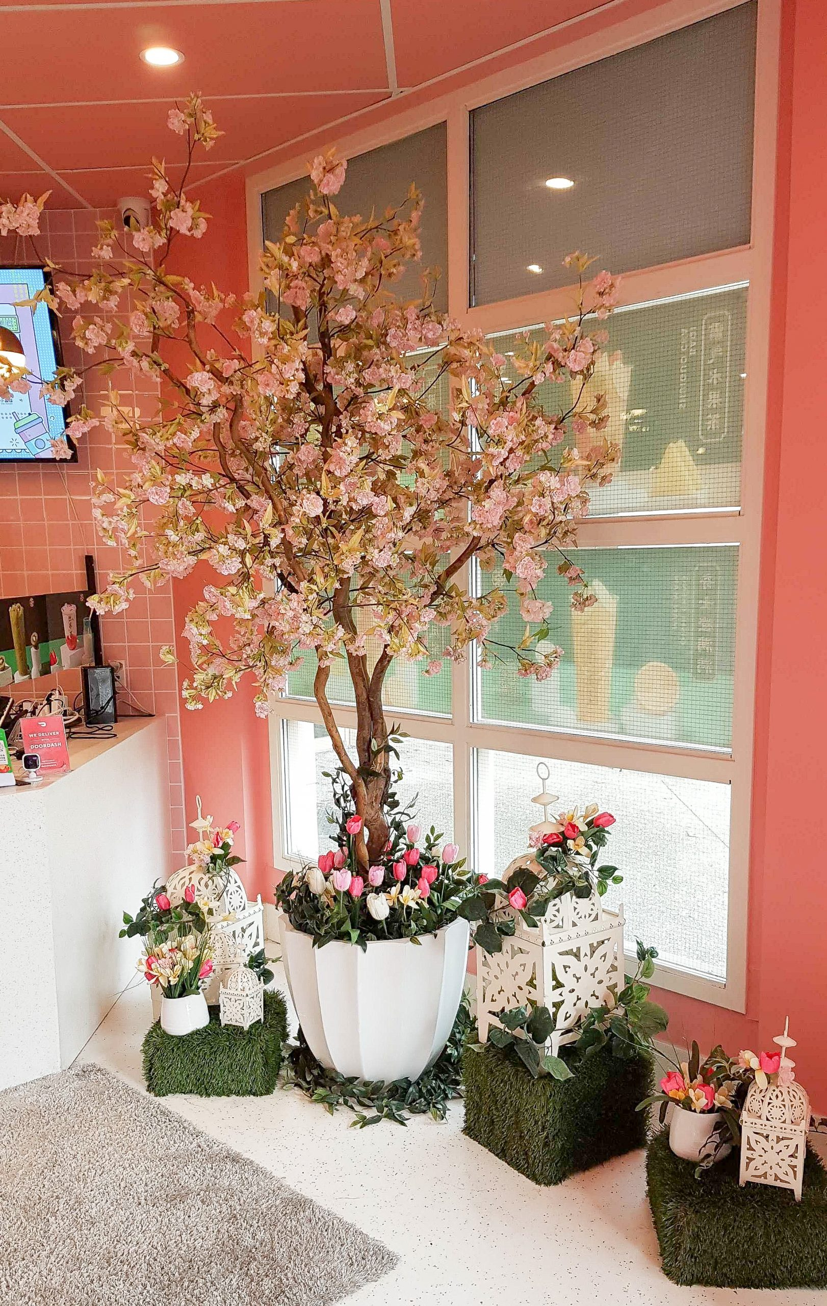 Cherry blossom in white planter with tulips ground cover. Vignette includes grass cubes with lanterns and tulip decor