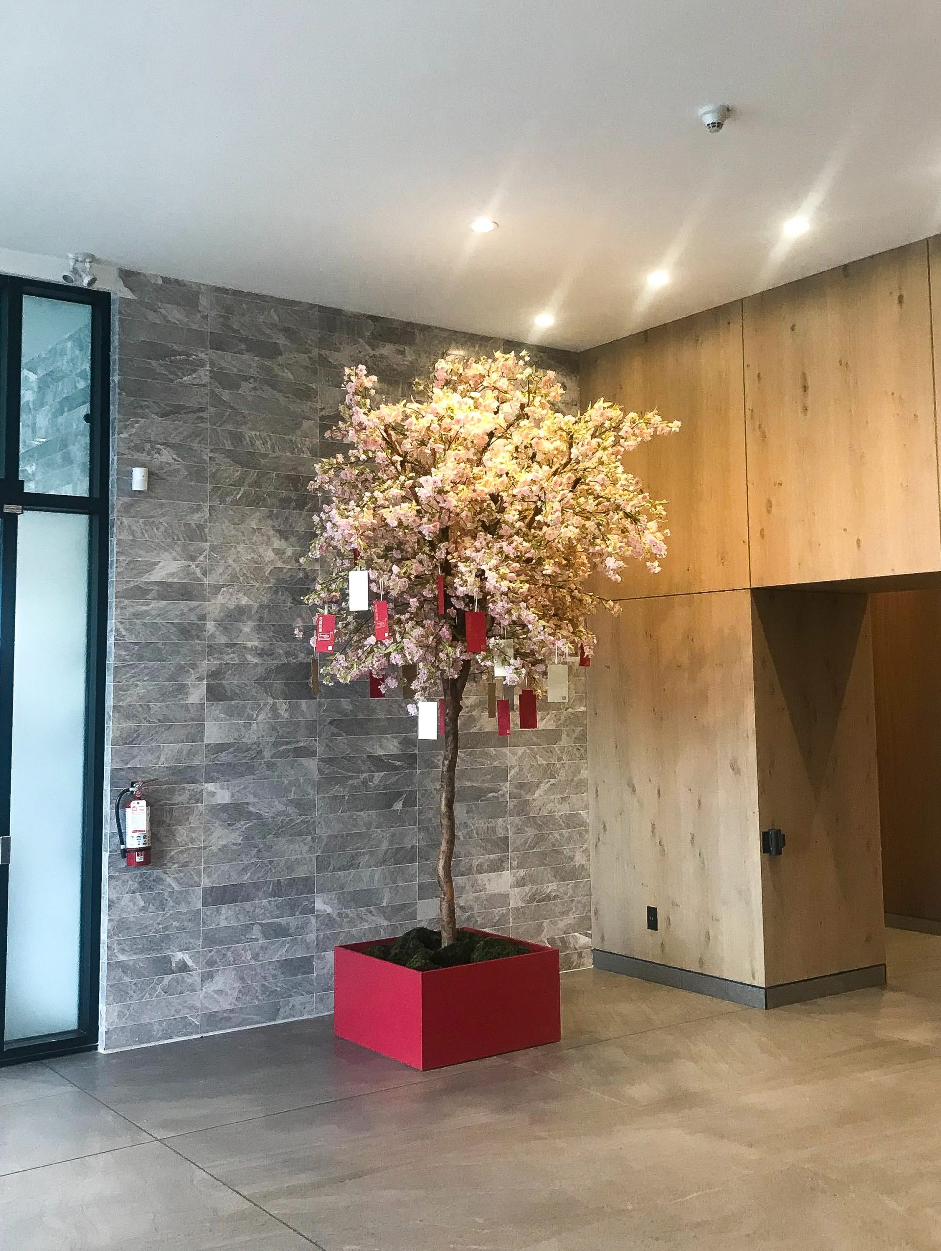 Cherry blossom wishing tree with chinese new year wishes hanging from the branches, in large red planter in commercial lobby