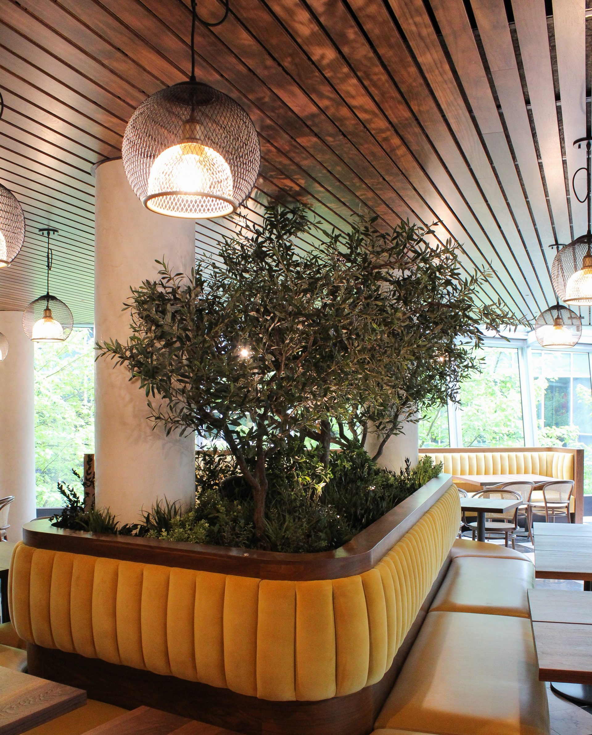 Large yellow upholstered banquette with wood tables in restaurant with 3 custom sized artificial olive trees on natural wood trunks set in the centre of the banquette