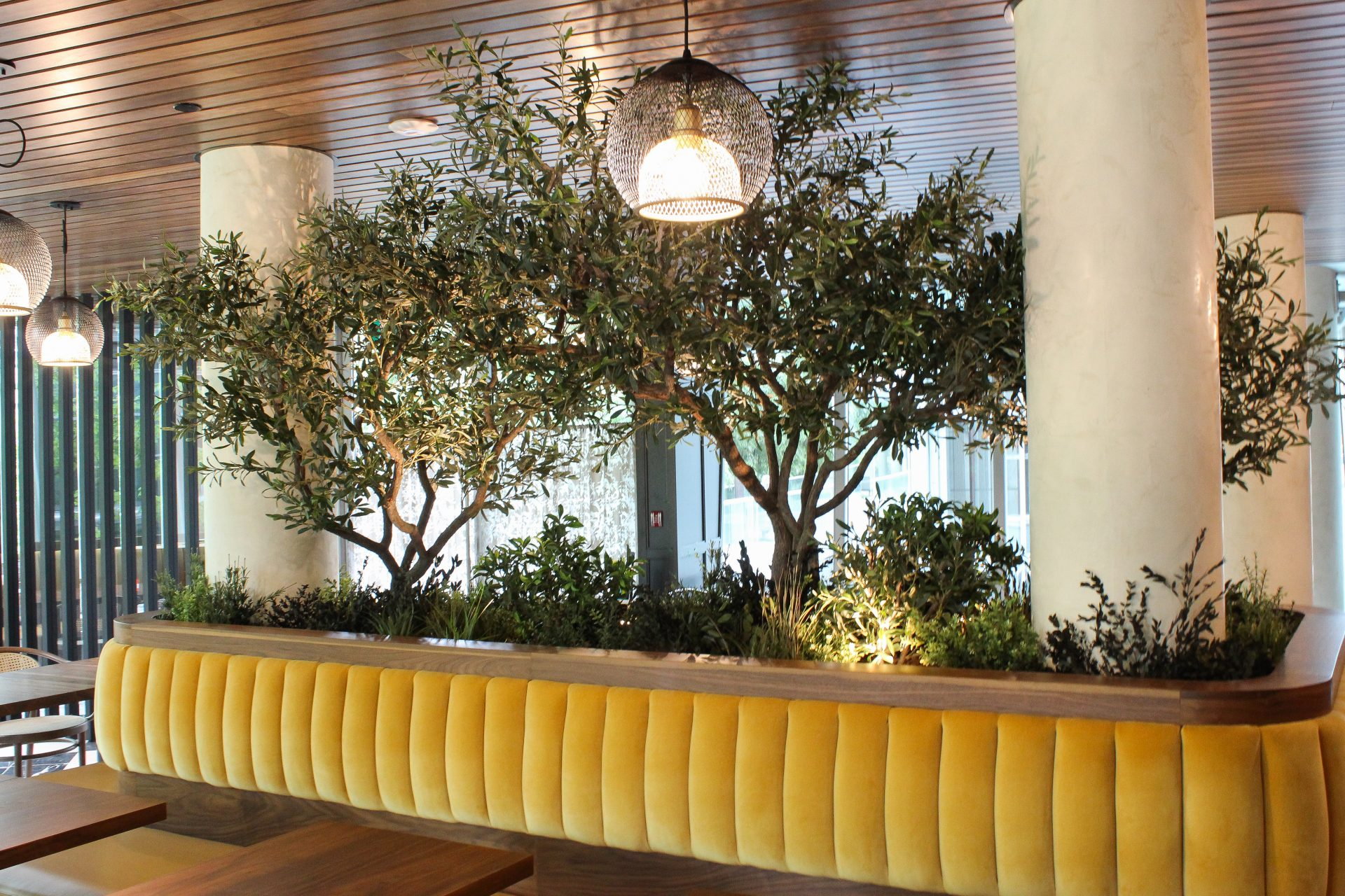 Artificial olive trees on natural wood trunks with mixed artificial and preserved greenery as ground cover set in the centre of a yellow upholstered banquette