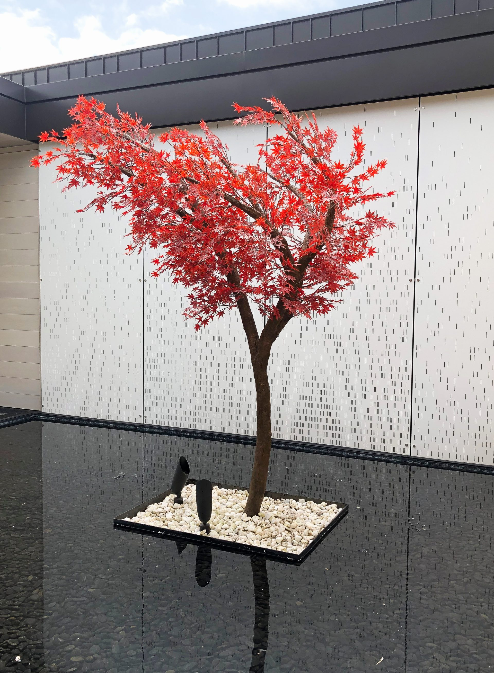 Asymmetrical outdoor red japanese maple tree as centre of water feature in residential home.