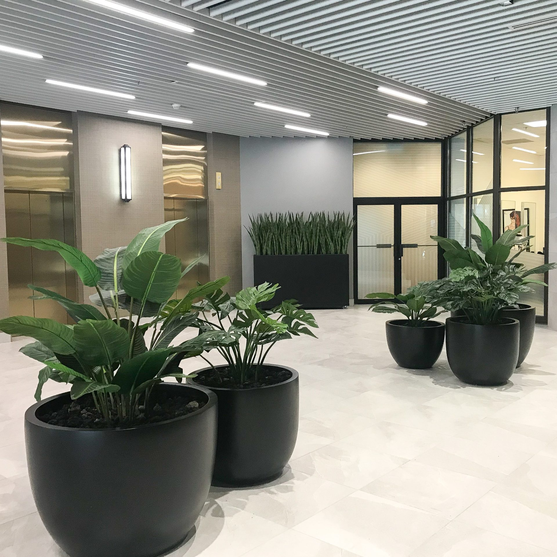 Two large black fibreglass planters with tropical greenery in the foreground with tall trough and tree of tropical greenery in background
