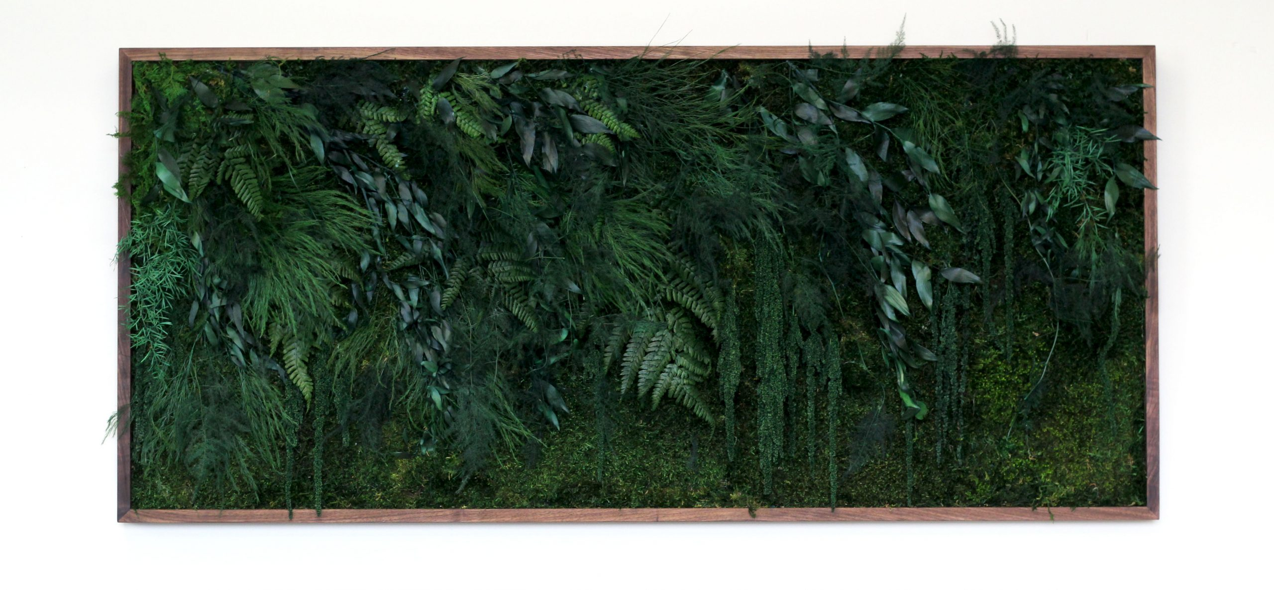 dark green preserved moss and grenery wall in dark wood frame on white wall, photo straight on