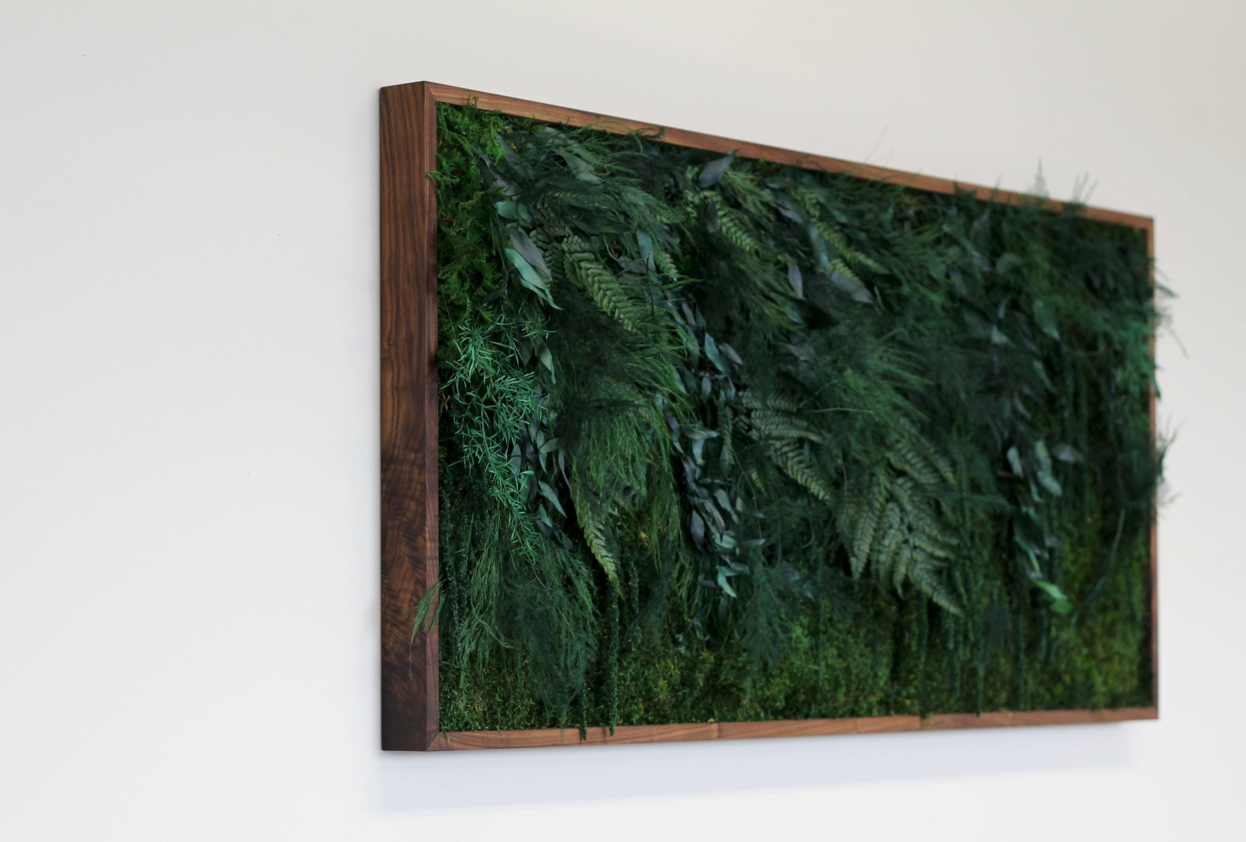 Dark green preserved moss and plant green wall in dark wood stained frame on white wall