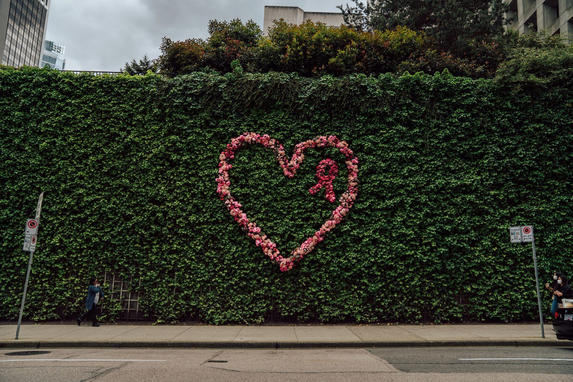 L'amour installation on Thurlow , giant heart shape in pink flowers on greenery hedge with breast cancer symbol in pink flowers for Fleurs de Villes