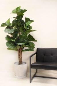 Greenscape Design Artificial Fiddle Leaf Tree