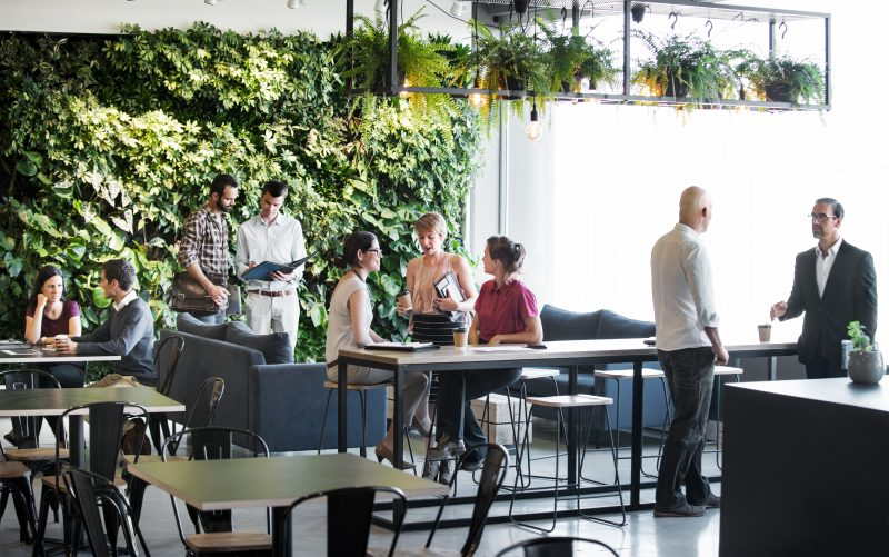 biophilic design applied to an office environment