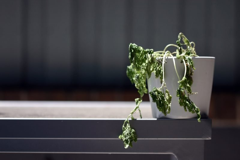 Reasons Fake Plants Are Practical Options - lack of green thumb