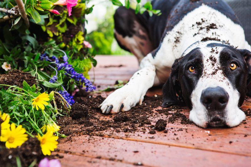 Reasons Fake Plants Are The Most Practical - Pets